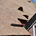 Rieten dak - Boerderij Putten details